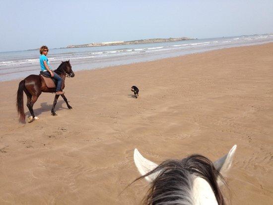 Equi Evasion : A full gallop down this beach — fantastic!