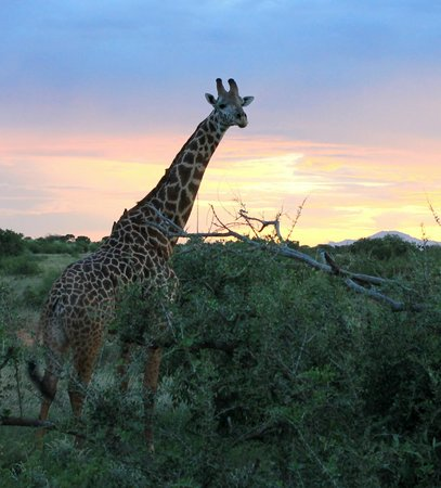 Dream Kenya Safaris: Tsavo