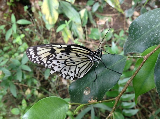 Tropical Wings Zoo : Just one more of Many !!!