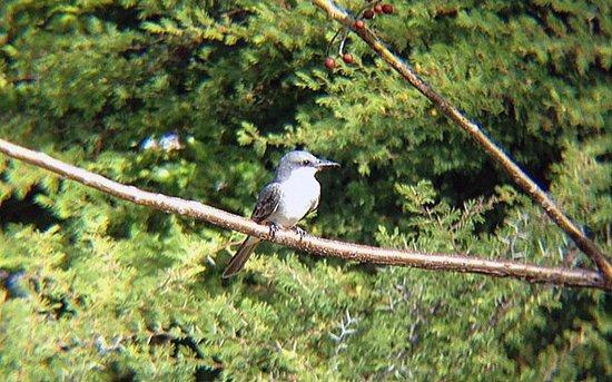 Auriga Ecolodge: Vogeltje