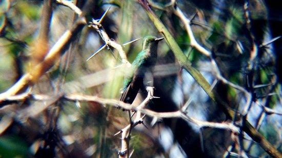 Auriga Ecolodge: Kolibri