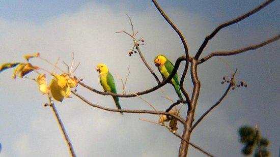 Auriga Ecolodge: Papegaaien