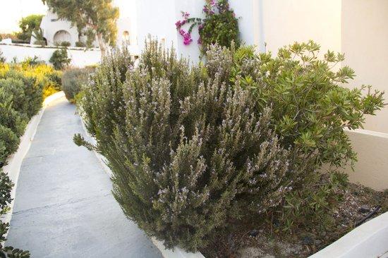 Maria's Place: cheiro de alecrim