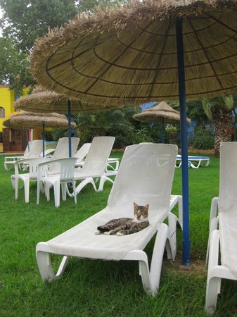 Caribbean World Hammamet Garden : Caribbean World Sun Garden Hammamet