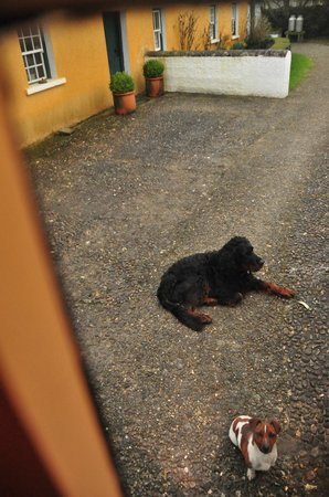 Adare Irish Cottages: sweet Hector right outside our door