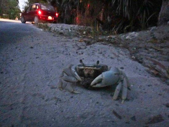 Cabanas La Luna: Cute Crabs