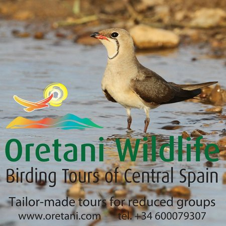Oretani Wildlife - Day Private Tours