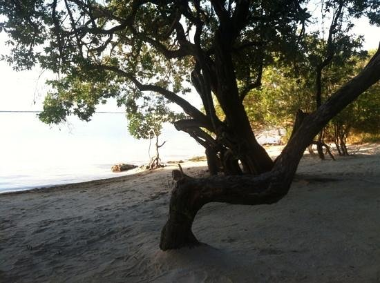 Hilton Key Largo Resort: mangrove beach