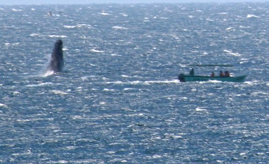 Solmar Resort: HUGE whale offshore of hotel. Bummer my camera was not in focus!!