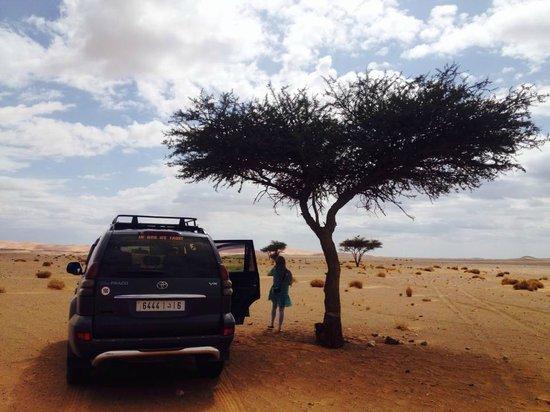 Sahara Desert Crew: Sahara Desert tree