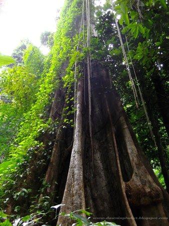 BluAnda: The Big Tree with Blu Anda