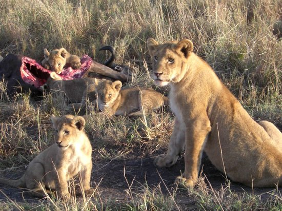 Maridadi Africa Safaris Day Tours