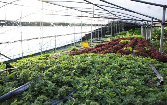 Los Pinos - Cabanas y Jardines: Hydroponic Garden