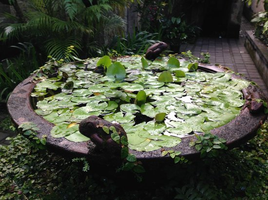 Barong Resort and Spa: Lush Green