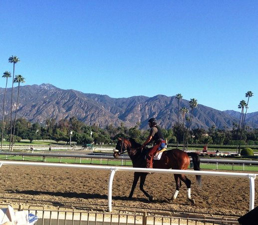 Santa Anita Race Park: Horse working out pre-race