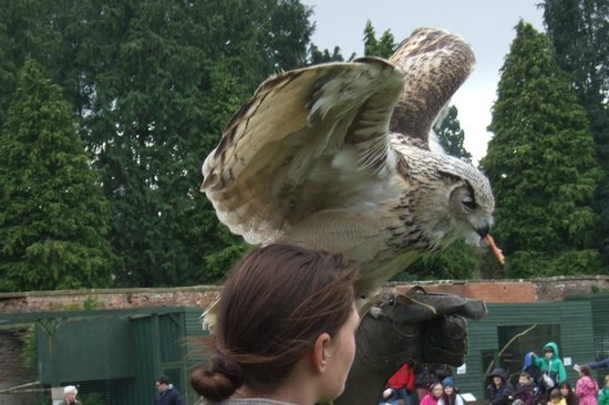 Thorp Perrow Arboretum: Eagle Owl receives a reward