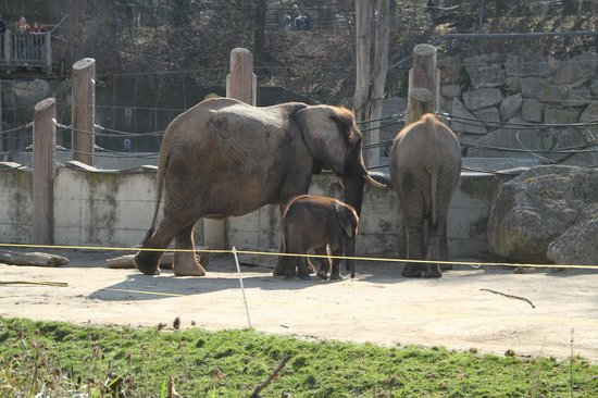 Tiergarten Schoenbrunn - Zoo Vienna : слоники