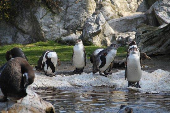 Tiergarten Schoenbrunn - Zoo Vienna : пингвины)))