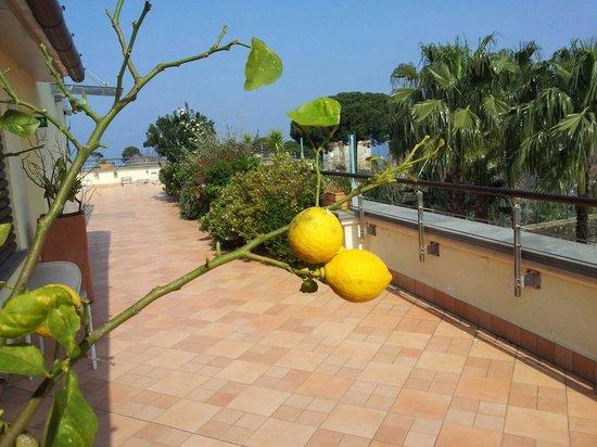 Seven Hostel: La terrazza..e i piccoli limoni!