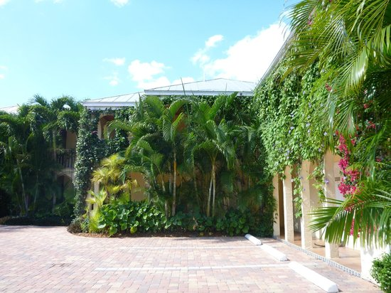 The Caribbean Court Boutique Hotel: Beautiful plant species
