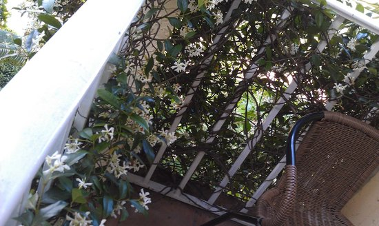 The Caribbean Court Boutique Hotel : vines growing on room 125's balcony