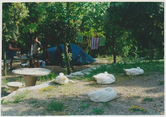 Le Soline Camping: animals