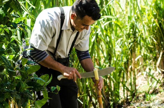 El Trapiche Tour: Jorge cuts us a piece of sugar cane with his machete.
