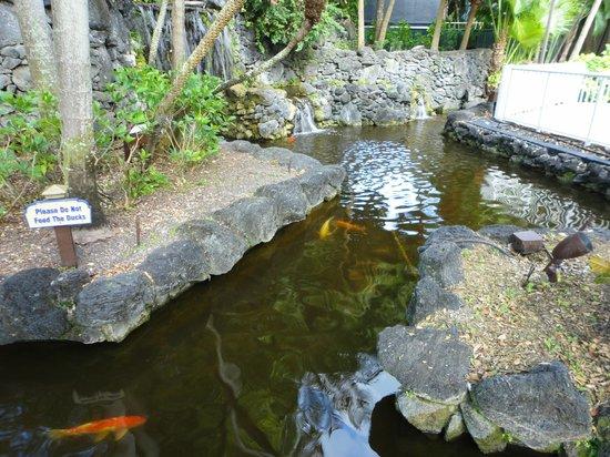 Bonaventure Resort & Spa: koi pond