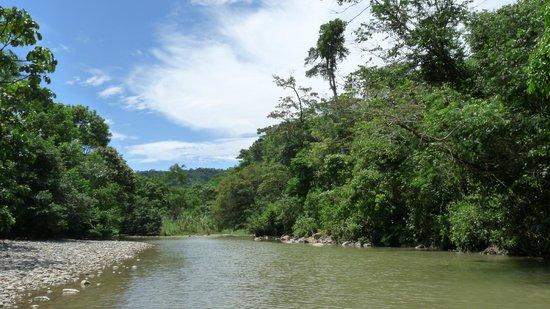 Sacha Runa Jungle Lodge : Around the island