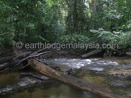 Earth Lodge Ulu Muda: The cool clear Sungai Labua along the Bukit Labu Trail