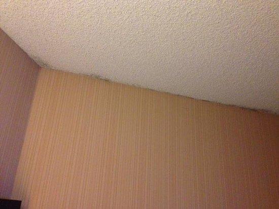 Hotel Maya - a DoubleTree by Hilton Hotel: MOLD