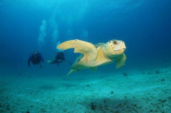 Grand Palladium Kantenah Resort and Spa: Excellent professional Diving center - active marine life