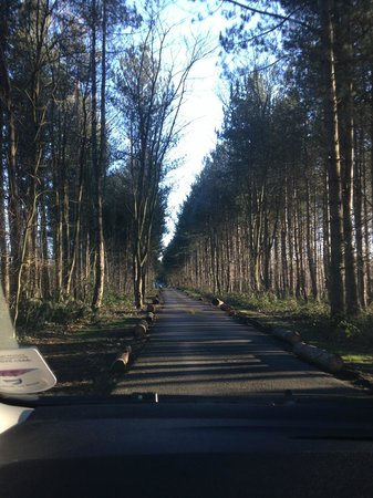 Griffon Forest Lodges: The drive up to the cabins