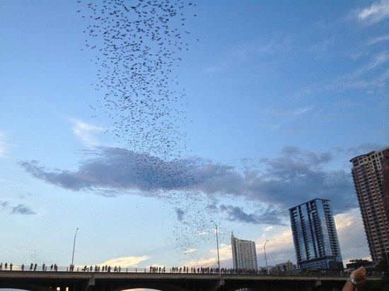 Congress Avenue Bridge / Austin Bats: Летучие мыши. Мост Конгресс Авеню