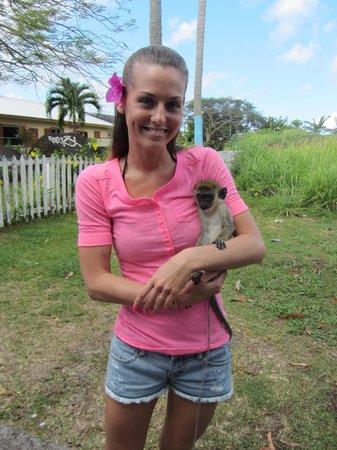 Island Paradise Tours: Monkey!