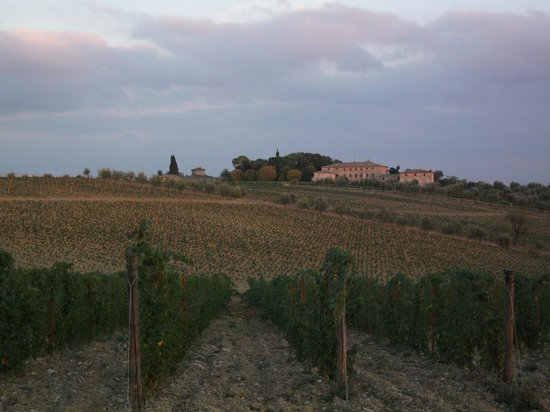 Fattoria Argiano in Chianti : Vineyards sunset near Argiano