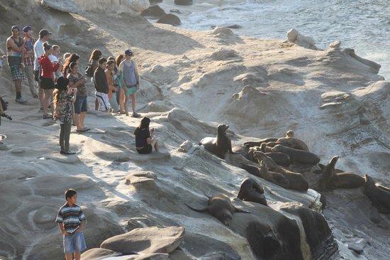 La Jolla Cove: idiots who have to distub them