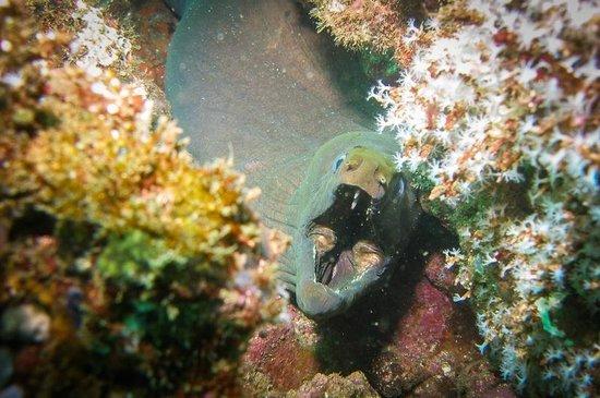 Dive Academy Ballena Blanca : Panamic Green Moray