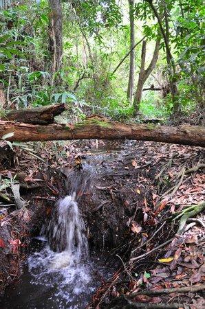 Витория-да-Конкиста: Reserva Ambiental