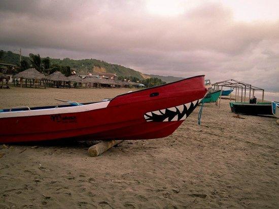 Baloo: Canoa Beach, Ecuador