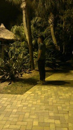 Doubletree by Hilton Orlando at SeaWorld: garden at night