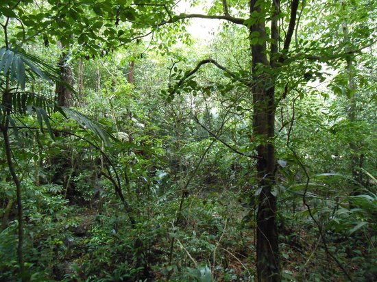 Go With Gus Tours: Rainforest