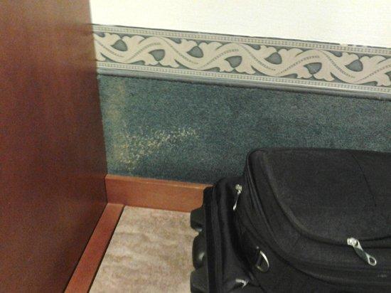 Starhotels Vespucci: macchie moquette