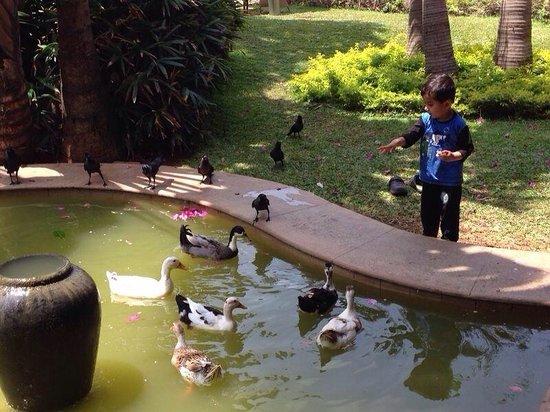 Vivanta by Taj - Fisherman's Cove: Feeding ducks