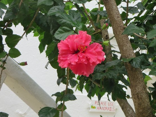 Franklyn D. Resort & Spa: Flowers