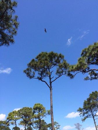 Savannas Preserve State Park: Savanna Preserve