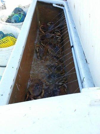Randy's Fishing Trips and Whale Watching Trips: crab hold on the boat