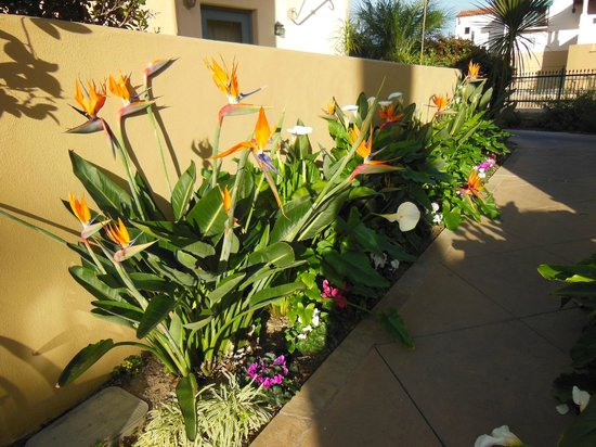 Harbor View Inn: flowers in paradise