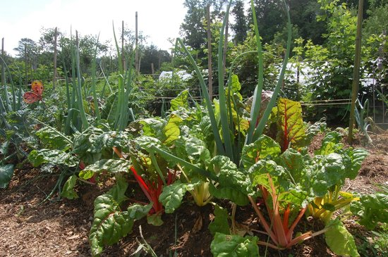 Pioneer Cabins & Guest Farm: Organic vegetables and fruits gardens