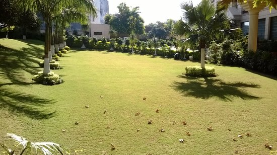 The Atrium on the Greens : lawn